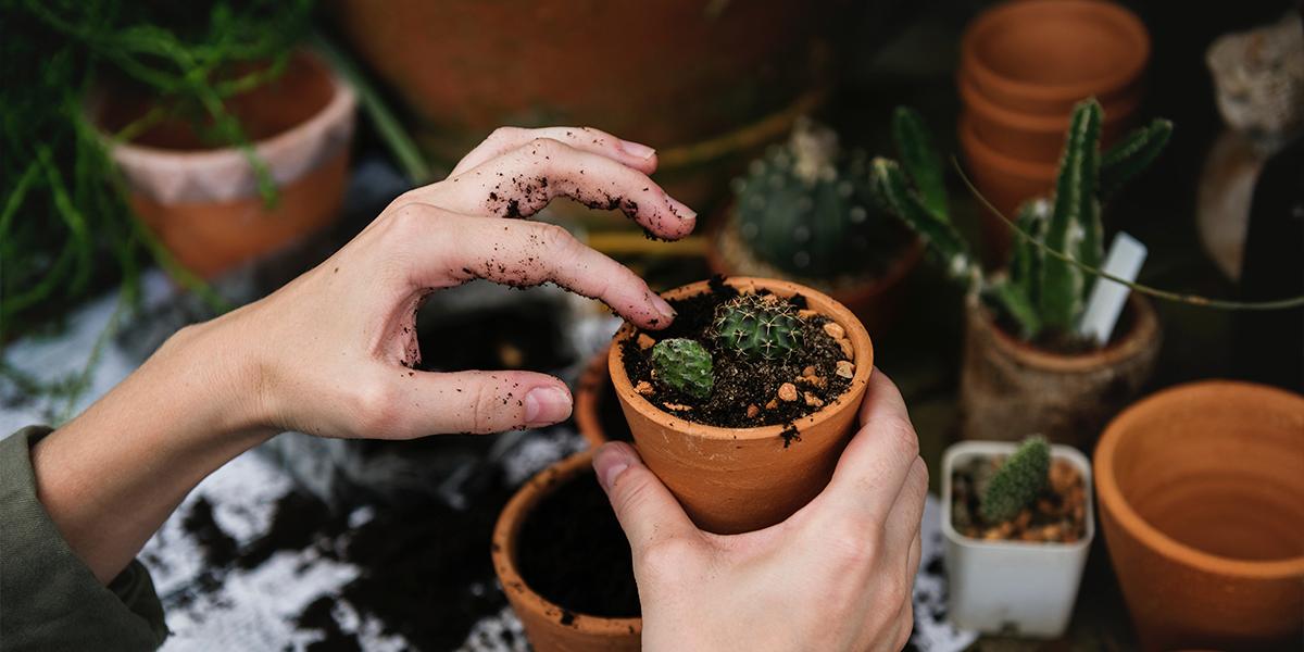 Proyecto Labor, Servicio de Paisajismo y jardinería en Guadalajara